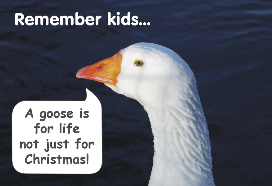 A goose is for life, not just for Christmas, 2003 card.