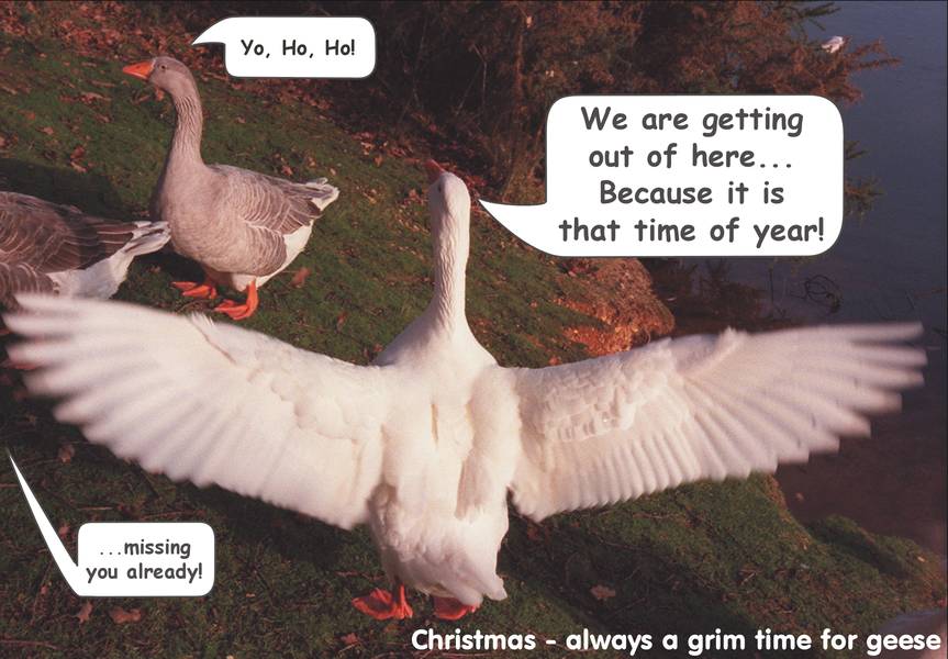 We're getting out of here, 2004 Christmas card.